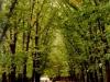 Bükreş Parkları