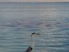 maldivler2