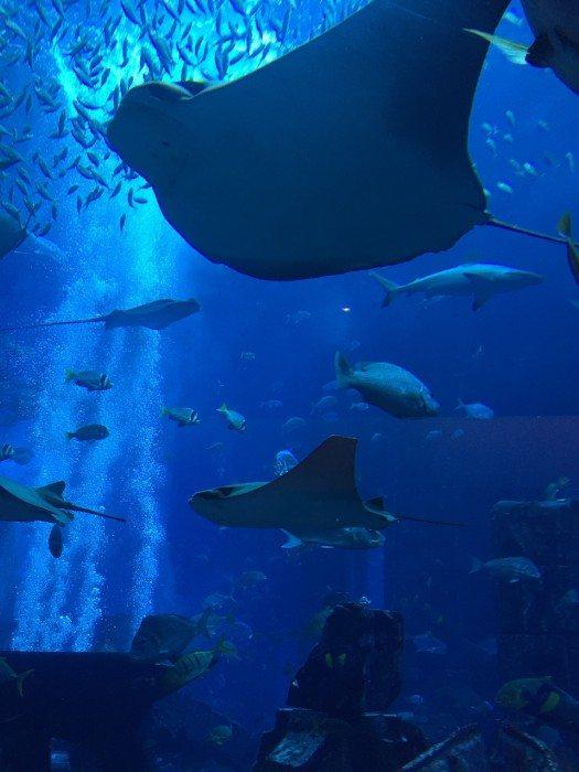 Atlantis akvaryum