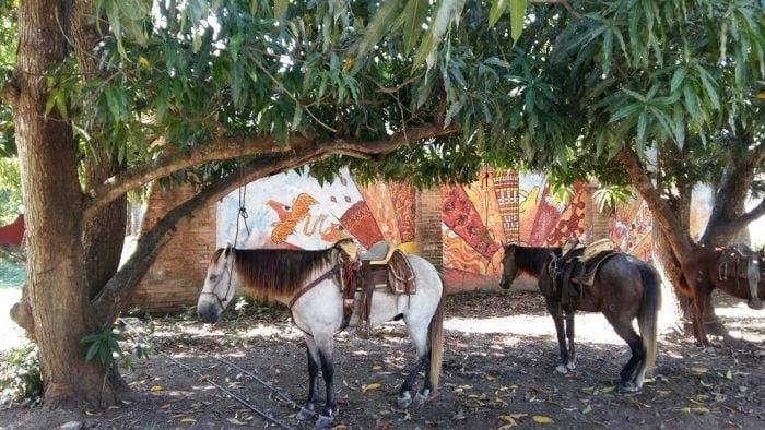 san-pancho-horses